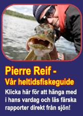 Pierre Reif - Vår heltidsfiskeguide!