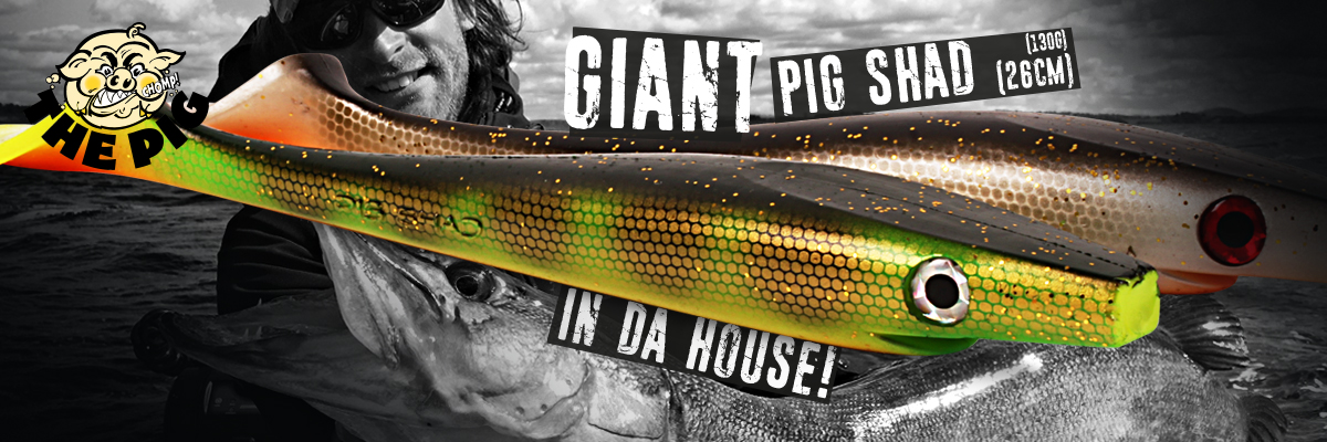 Giant Pig Shad